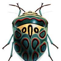 İlham Veren Kocaman Böcekler