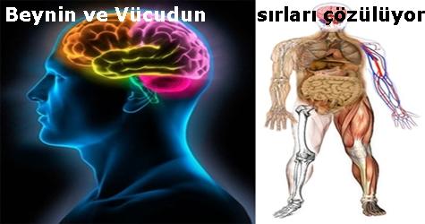 Beynin ve Vücudun Sırları Çözülüyor